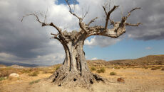 Ziemia niezdatna do życia? Raport ONZ