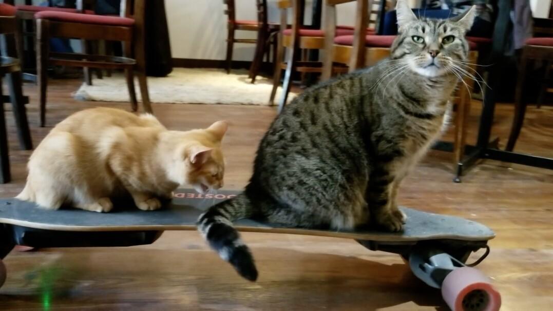 Czworonożni skejci. Koty na desce elektrycznej