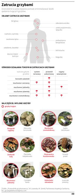 Zatrucia grzybami (Maria Samczuk, Małgorzata Latos/PAP)
