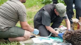 Nie żyje Eryk, najstarszy niedźwiedź w Tatrach